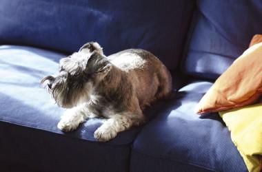 Zwierzęta w domu – sprzątanie