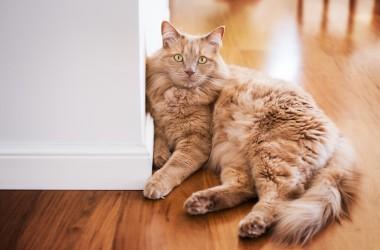 Zwierzęta w mieszkaniu – jakie ściany, jaka podłoga