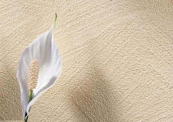 Ściana pomalowana Lazurem Gold marki Alpina