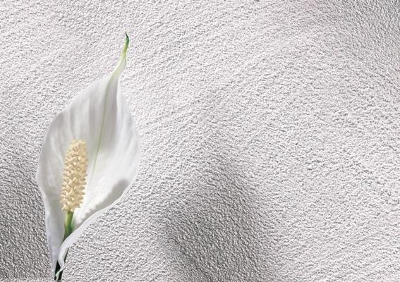 ściana pokryta Lazur Silber, Alpina
