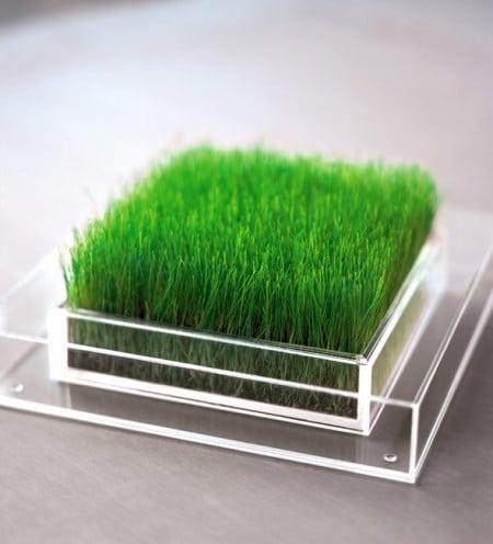 Pojemnik przezroczysty Chlorophylle, Fabryka Form