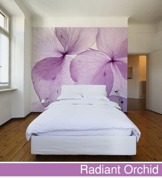 Fototapeta big-trix.pl - radiant orchid