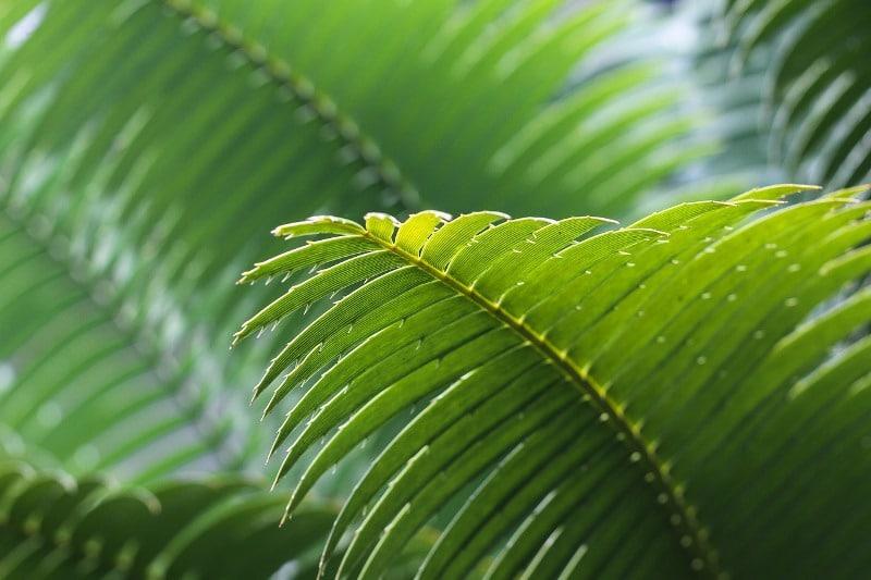 Palma czyści i nawilża powietrze