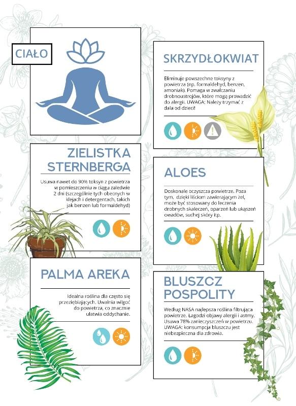 Właściwości roślin doniczkowych