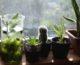 Rośliny doniczkowe najlepsze do mieszkania