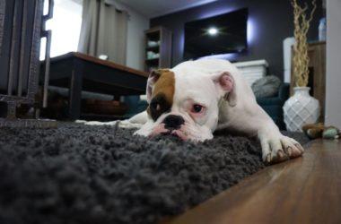 Dlaczego warto ubezpieczyć swoje mieszkanie – mądry Polak po szkodzie