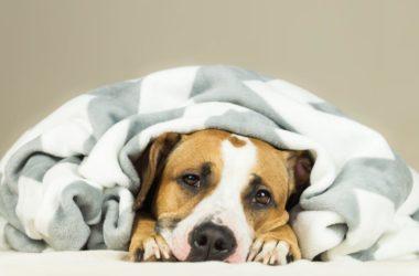 Cztery łapy w domu, czyli jak urządzić mieszkanie pod kątem psa