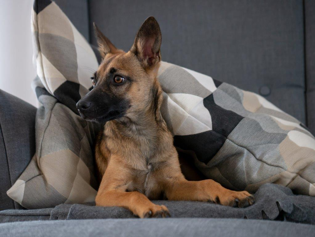 NZ_-_Cztery-lapy-w-domu-czyli-jak-urzadzic-mieszkanie-pod-katem-psa 3