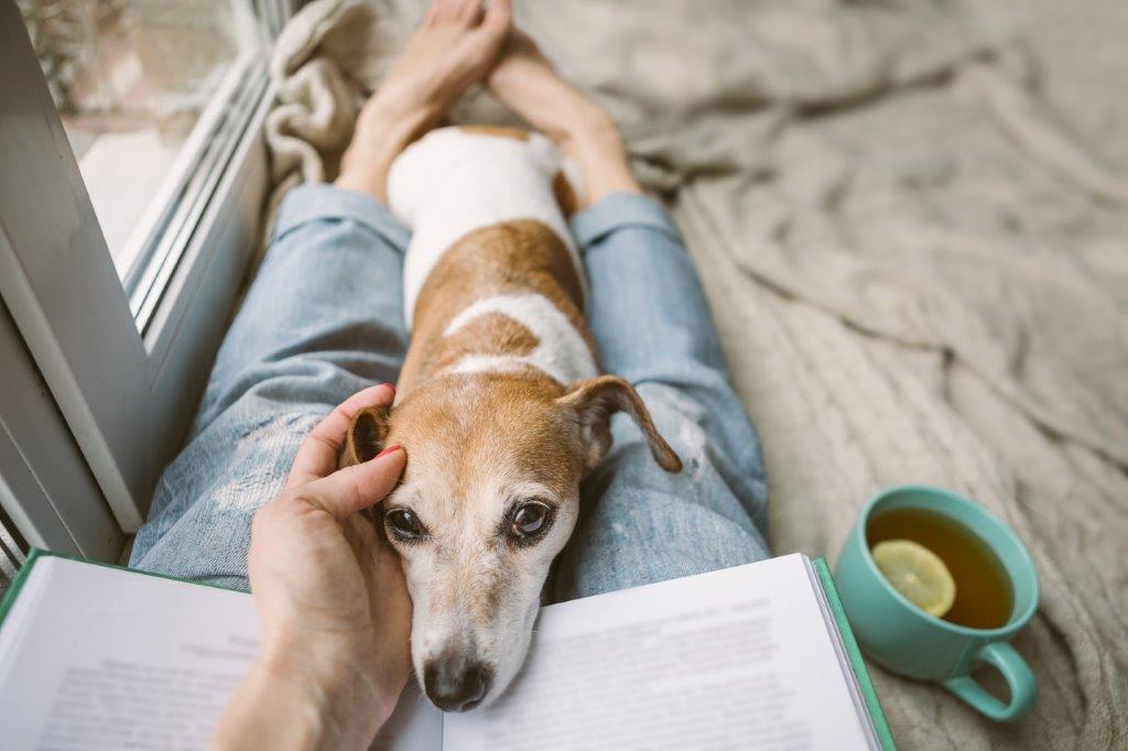 jak urządzić mieszkanie pod kątem psa