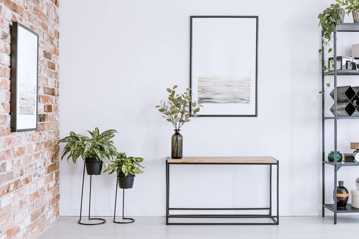 Domowe rośliny w mieszkaniu