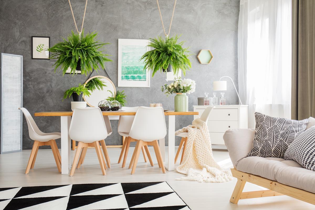Mieszkanie z roślinami