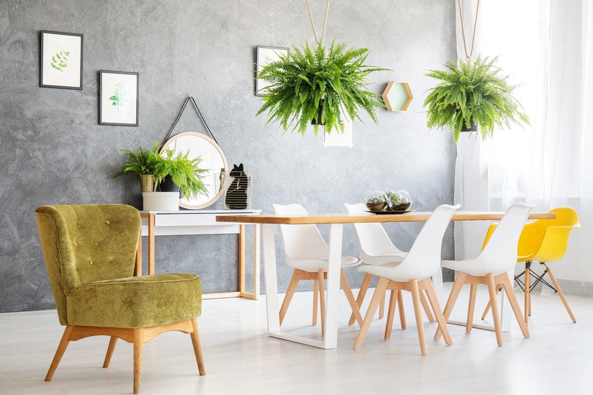 Rośliny do mieszkania