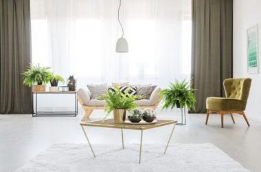 Rośliny w domu – aranżacja mieszkania z roślinami
