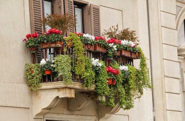 Jakie kwiaty na balkon wybrać?