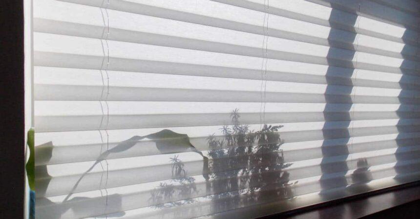 Plisy okienne – co warto o nich wiedzieć?
